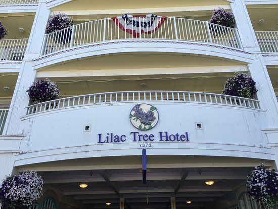 Lilac Tree Suites & Spa: photo4.jpg