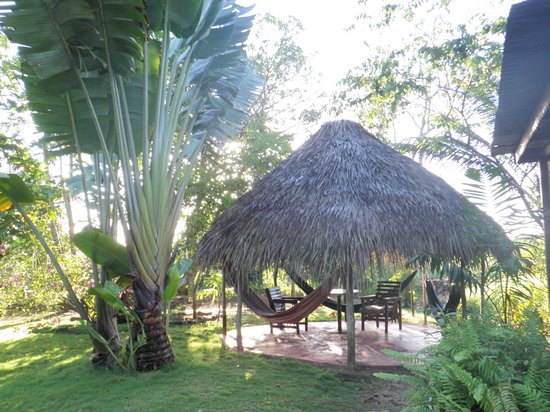 Negril Yoga Centre: yard