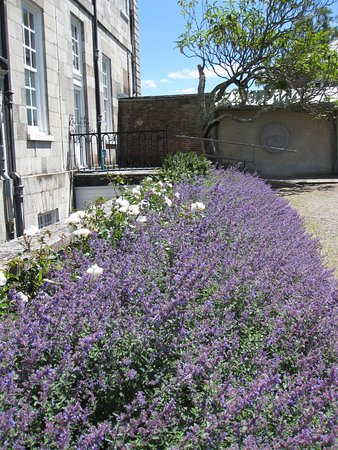 Torpoint, UK: Antony - house wrapped in Lavender!