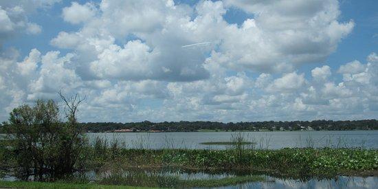 Lake Hollingsworth: marsh area
