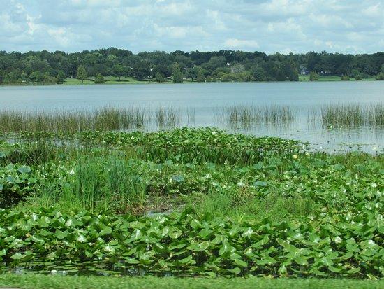 Lake Hollingsworth: lake