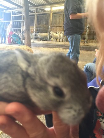 Bolton, UK: Cuddles from baby bunny x