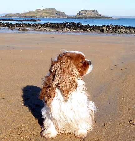 Dirleton, UK: My dog on the sands - with Fidra and the Forfth behind.