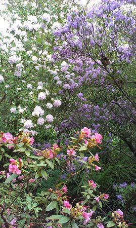 Alnwick, UK: Rhododendrons