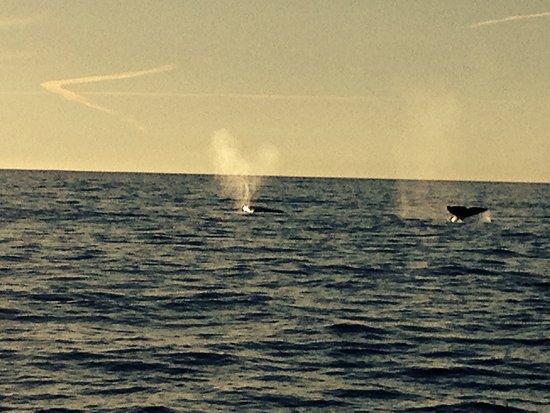 Depoe Bay, Oregón: Two Grey Whales heading South.