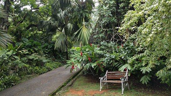 Victoria, Seychellerne: bench