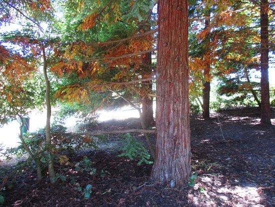 เซบาสโตโพล์, แคลิฟอร์เนีย: Ragle Regional Park