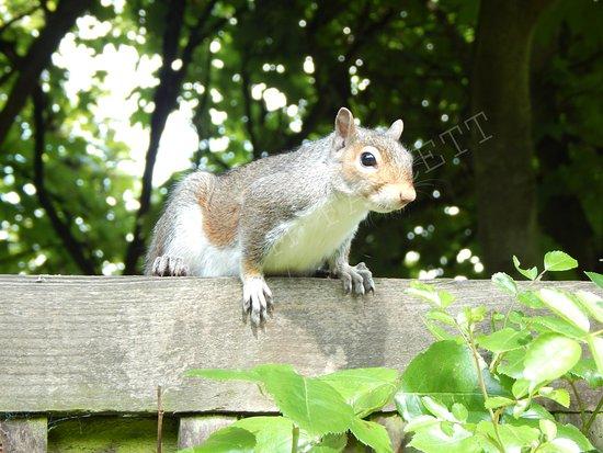 South Cliff Italian Gardens: Squirrel on railings in the Italian Gardens