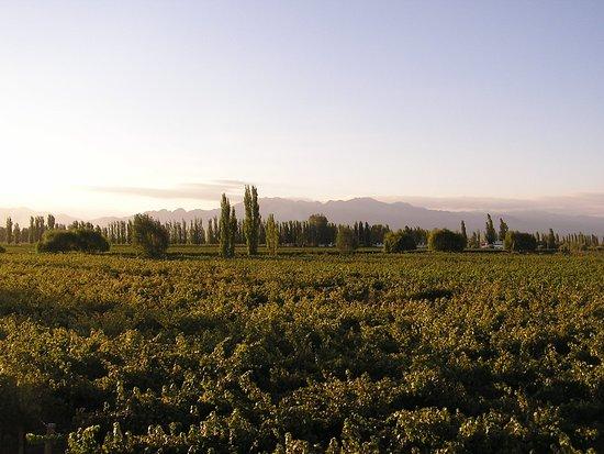 Cavas Wine Lodge: Atardecer de verano 0