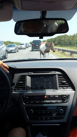 Assateague Island National Seashore: Be careful when you are driving