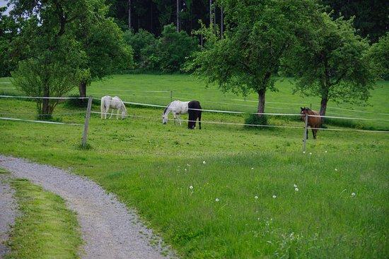 Wangen, Germania: Horses grazing nearby.