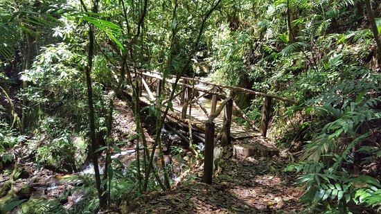 Parque Nacional La Tigra: Un sendero típico. Cuando no se hace ruido se escuchan a todo tipo de animales