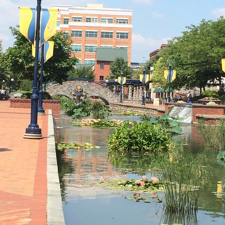 Frederick, MD: Canal - full of lily pads, koi, and ducks