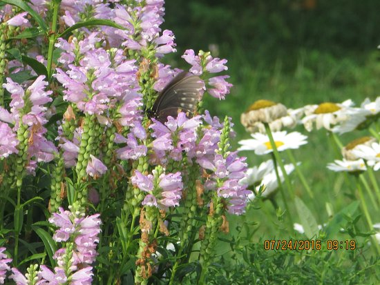 Pittsburgh Botanic Garden: Meadow With Butterfly
