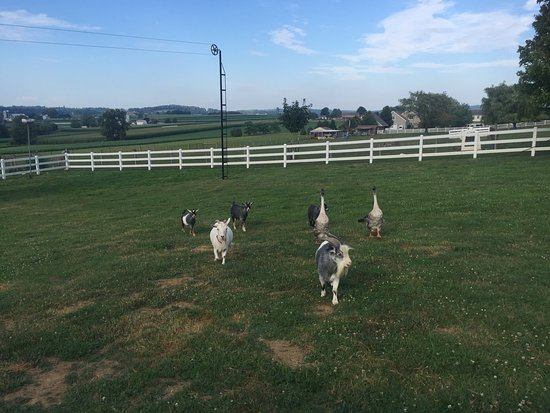 Kinzers, Pennsylvanie : Feed our friendly farm animals