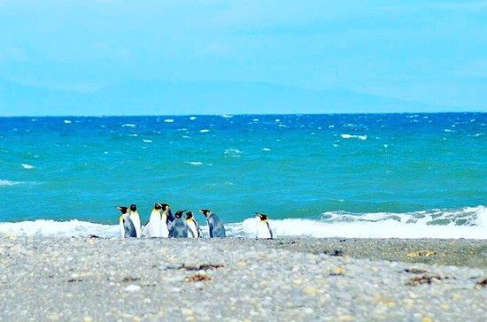 Tierra del Fuego, Chile: photo0.jpg