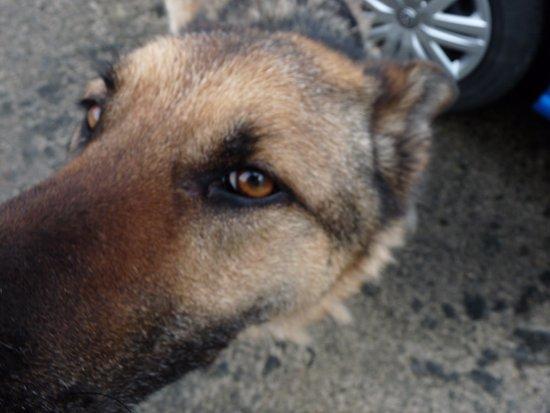 Tulla, Irlande : friendly dog will greet you warmly