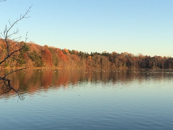 Baldwinsville, NY: Fall 2015 at Beaver Lake. Canada geese on the lake.