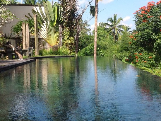 Tegalalang, Endonezya: This is the view from the dining area and overlooks the rainforest, pool was lovely