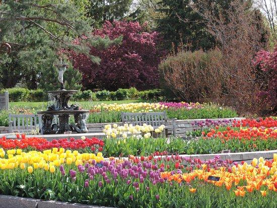 แชนฮัสเซน, มินนิโซตา: Spring 2016 spring bulb gardens