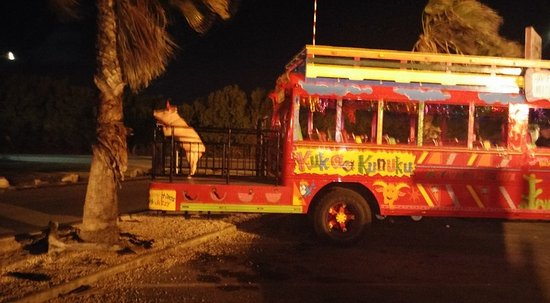 Paradise Beach Villas: The KuKoo KununKo Bus. This is the Bar Crawl Bus. Young or old you're going to have a great time