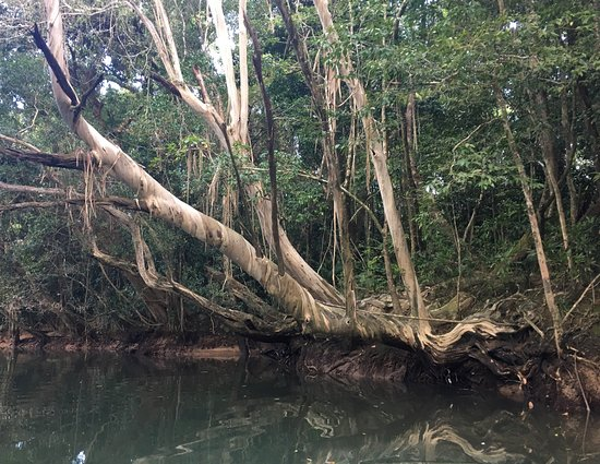 Daintree, Australia: photo3.jpg