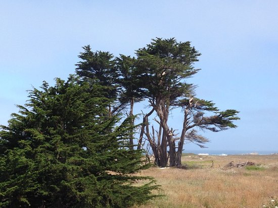 Surf and Sand Lodge: The wind-swept look!  View from walking trail.