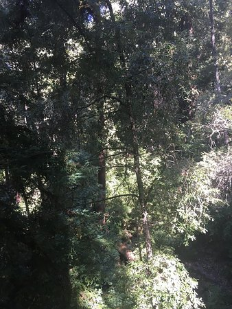 Mount Hermon, Kalifornien: photo1.jpg
