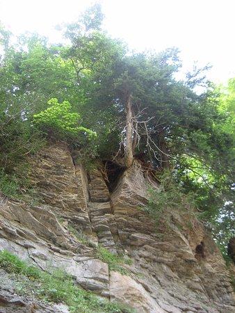 Owen Sound, Canada: tree - rock face