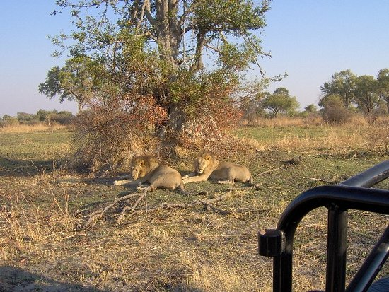 Maun, بوتسوانا: Two brothers having a siesta during the morning