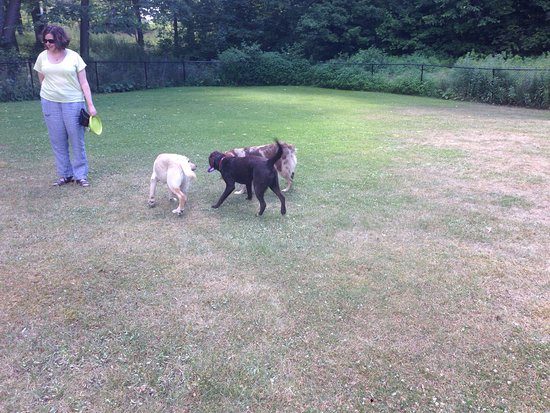 North Kawartha, Canadá: Our first visit to Viamede with the pups! Needless to say they loved it. Stayed in 412 with grea