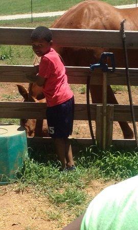 McDonough, GA: My son wanted this horse...