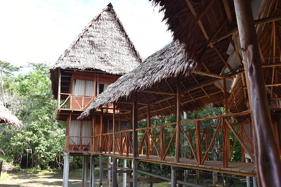 Amazonia Expeditions' Tahuayo Lodge-billede