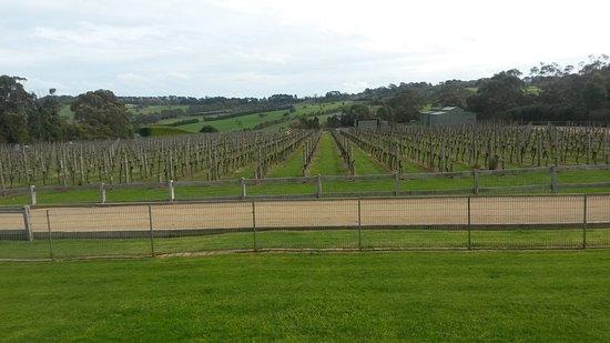 Rosebud, أستراليا: The spectacular Pier 10 vineyard at Shoreham, one of our regular stops.