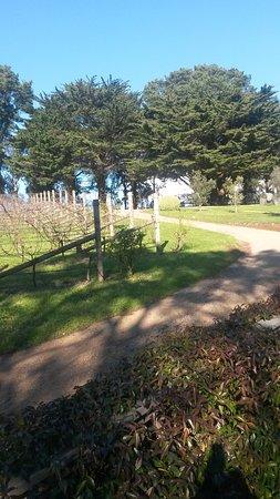 Rosebud, أستراليا: Winter at the lovely Mont Rouge Estate.