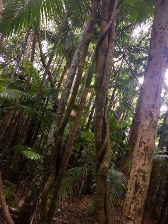 Cairns Region, Αυστραλία: photo4.jpg