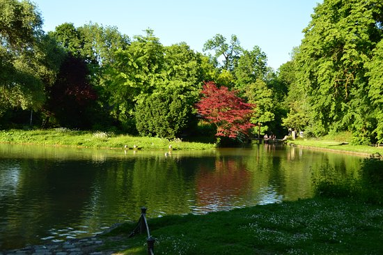 English Garden: One Of The Lakes At Englischgarten