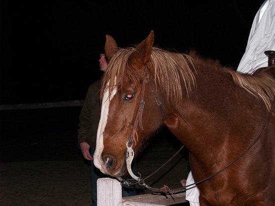 Cottonwood, AZ : Blazing M Ranch Horse 2