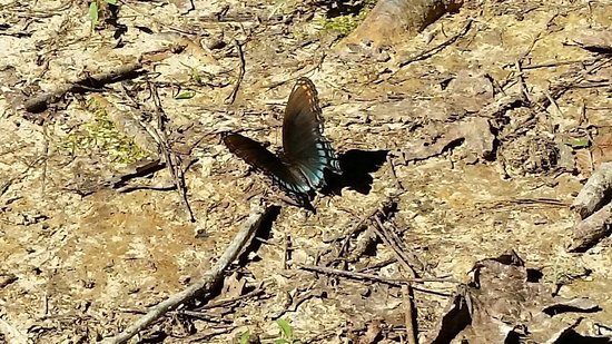 Collierville, TN: Saw a few of these beautys, a turtle, and a deer on the trail.