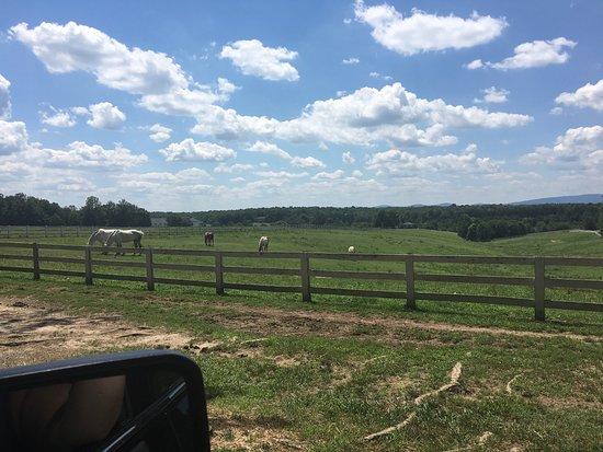 Gordonsville, VA: photo8.jpg