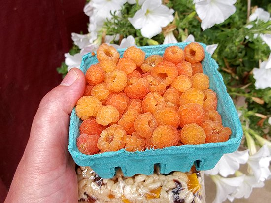 Grand Oak Culinary Market: The yellow raspberries that were sweeter than candy and found nowhere else.