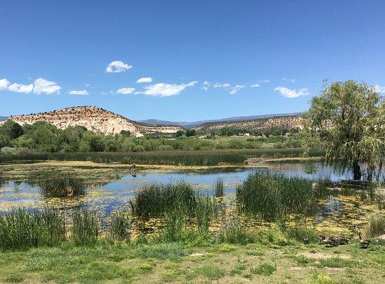 Boulder, UT: Bird refugee