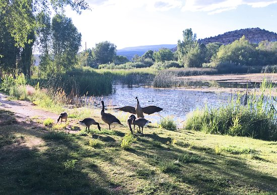 Boulder, UT: Geese