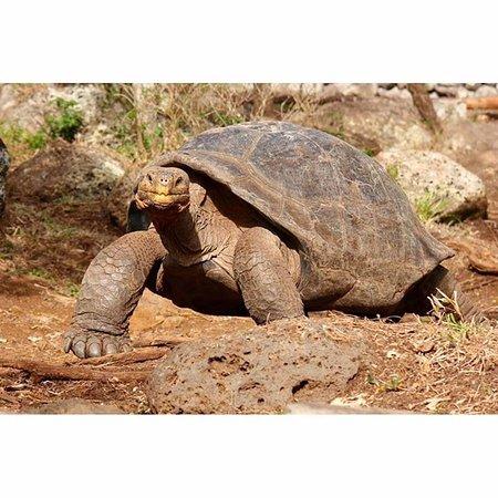 Floreana, Ecuador: Skölpadda