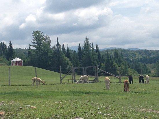 Sutton, Canada : Le paysage est à couper le souffle, un espace pique-nique est aménagé