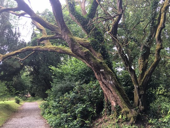 Lough Rynn Castle Estate & Gardens: The trees around the area are old and beautiful