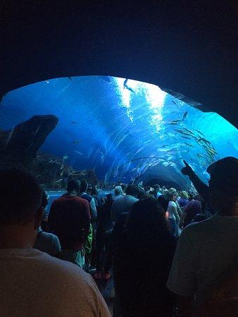 Georgia Aquarium: photo1.jpg