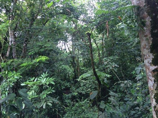 Фотография Selva Verde Lodge
