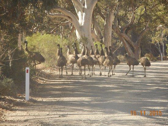 Port Augusta, Australien: Locals