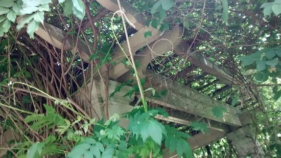 George Eastman Museum: Wisteria covering the pergola